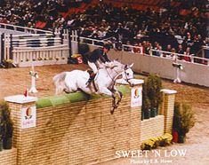 World Record show jumping horse. Sweet 'N Low jumping 7 foot 7.5 inches in 1983. A record that still stands. always amazes me!