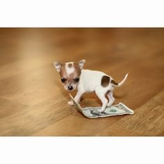 Oh. My. Gosh. So freaking adorable! Look at how tiny it is! That's a dollar bill it's standing on!