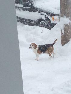 Mommy I love the snow yay!