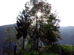 Ragonvalia