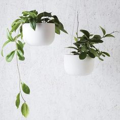 Simple clean and crisp. Let your foliage really shine in our Raw Earth Hanging Planters in Chalk White Large Hanging Planters, Hanging Plants Outdoor, Best Indoor Plants, Hanging Baskets, Contemporary Bowls, Plant Aesthetic, Plastic Flowers, Plant Design, Potted Plants