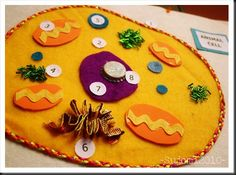fabric model of animal cell