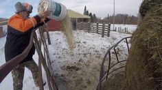 Living in NORTH Country/FEEDING COWS/Easy as Cowpie