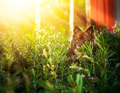 New Work, Behance, Vacation, Check, Summer, Animals, Animales, Vacations, Summer Time