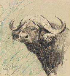 Wilhelm Kuhnert (1865-1926) - Buffalo, black and green pencil, 14,8 x 13,8 cm.