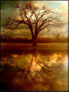 "A Place To ""Reflect"" by Elizabeth Burton.  What a beautiful scene!!  I am in awe!!"