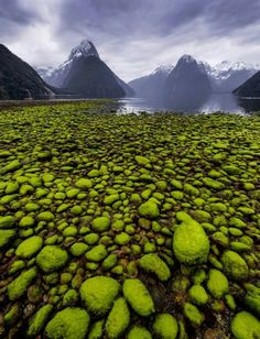 """35 Entries from the National Geographic Photo of the Year Contest """"Milford Sound, New Zealand"""" Beautiful Nature Scenes, Beautiful World, National Geographic Photo Contest, New Zealand Adventure, New Zealand Landscape, Milford Sound, Nature Beach, F 16, Weird Pictures"""