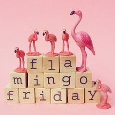 Have a great flamingo friday! #aflamingoaday #flamingofriday #pink #happy #flamingos #fun #flamingo #365daysproject #happycolours