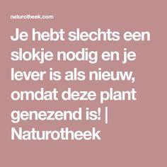 Je hebt slechts een slokje nodig en je lever is als nieuw, omdat deze plant genezend is!   Naturotheek