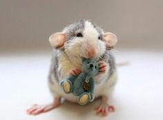 Inspiration - Cute rat photos (2)