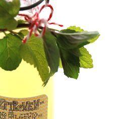 Rezept für einen Sommer-Sehnsuchts-Sirup (Zitrone-Pfefferminze-Zitronenmelisse) und wunderschöne Etiketten zum runterladen.