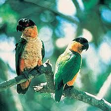 amazon birds - Google Search
