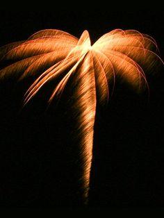 Palm Tree by popularmechanics. Photo by Pyro Spectaculars by Souza #Fireworks #popularmechanics