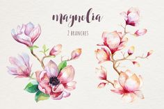 Watercolor magnolia by Peace ART on @creativemarket