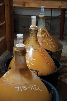 Fermenting demijohns of Annandale Atomic Hard Cider, at the Montgomery Place orchards in Annandale, NY. (photo - ROY GUMPEL)