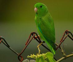 essay on parrot bird for kids