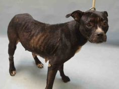 Dedicated to Saving NYC Shelter Animals  VIOLET -A1091657