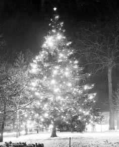 Christmas Tree at Michigan State University