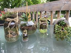 Terrarium varieties