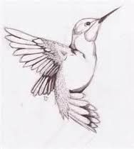 Image result for hummingbird line drawing