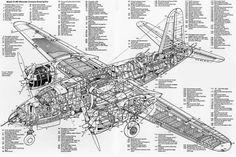 eagle cutaways - Google Search