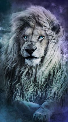 Blue Eyes Lion iPhone Wallpaper - iPhone Wallpapers