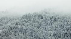 itakephotosofallthethings: Winter Is Here Issaquah, WA Woke up...