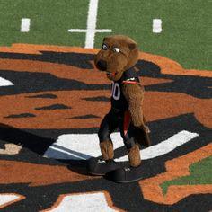 Mascot Monday: The Oregon State University Beavers