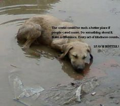Esdaw - European Society of Dog and Animal Welfare.   Strays have no choice at…
