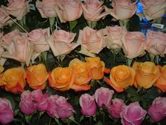 We have #roses for your Special Event. Check more at amazingflowersusa.com
