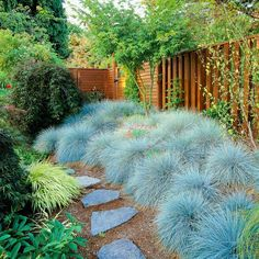 Beautiful idea for the garden...when we have our own.     Use blue fescue in large quantities to create big impact in the landscape. It's a great edging plant and its mounding habit is great for creating contrast with taller, more upright grasses. Name: Festuca glauca 'Boulder Blue'  Growing Conditions: Full sun and well-drained soil  Plant Size: To 1 foot tall and wide  Zones: 4-8