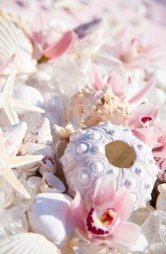 sea urchin coral and seesterne Purple Sea Urchin, Pink Summer, Summer Beach, Style Summer, Summer Loving, Beach Fun, Beach Party, Jolie Photo, Ocean Beach