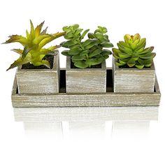 Set of 3 Realistic Artificial Succulent Plants w/ Rustic ... https://www.amazon.com/dp/B0192R3QK2/ref=cm_sw_r_pi_dp_UGfLxbS50GXF5