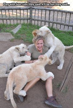 Playing with lion cubs...