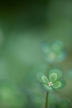 Four leaf clover ♣