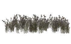 Grassland Flowers by wolverine041269