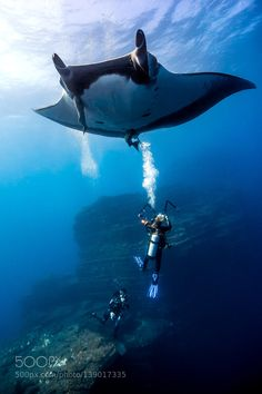 """Giant Manta playing with divers Go to http://OutBoardr.com and use code PINTEREST for free shipping on your first order! (Lower 48 USA Only). Sign up for our email newsletter to get your free guide: """"Boat Buyer's Guide for Beginners."""""""