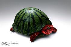 waterturtlemelon