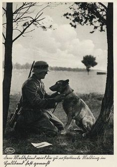 WW II and Vietnam war images Military Working Dogs, Military Dogs, German Soldiers Ww2, German Army, Germany Ww2, War Dogs, War Image, War Photography, History Photos