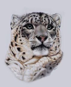Animal Paintings | 20 Beautiful and Realistic Animal Paintings by Heather Lara
