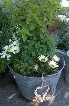 Jugs & Tubs || STAUDENSCHMUCK.CH || Zinc bath, old zinc bath, old zinc bath ..., #amp #bath #Jugs #STAUDENSCHMUCKCH #Tubs #Zinc Plantation, Container Gardening, Outdoor Gardens, Canning, Bathtub, Gardens, Craft Ideas, Plants, Garden Deco
