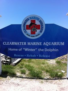 Clearwater Marine Aquarium in Clearwater, FL - home to Winter the dolphin, and featured in the movie Dolphin Tale!