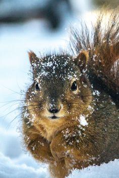 """earthyday: """" Squirrelography by Joe McEwan """""""