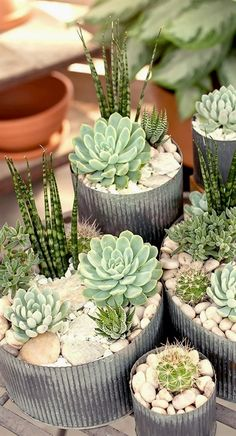 Most current Screen Garden Planters succulents Tips Pots, tubs, and half barrels stuffed with flowers add appeal to any garden, but container gardening Types Of Succulents, Succulents In Containers, Cacti And Succulents, Planting Succulents, Cactus Plants, Planting Flowers, Cactus Flower, Pot Plants, Growing Succulents
