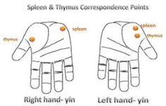 spleen thymus correspondence immunity Sujok