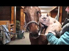 Surprising Friendship between a Horse and a Kitty