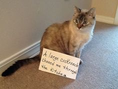 This gallery of cat shaming photos will give you life!