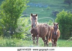 """Brown Horses""- Horse Stock Photo from Gograph.com Brown Horse, Horse Photos, Art Images, Clip Art, Horses, Stock Photos, Illustration, Pictures, Photography"
