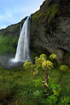 Seljalandsfoss, one of the most famous waterfalls of Iceland