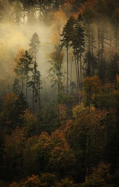 ~~Ghostly Memories ~ an atmospheric autumn in the Swiss Alps, Interlaken, Bern, Switzerland by alexandre-deschaumes~~